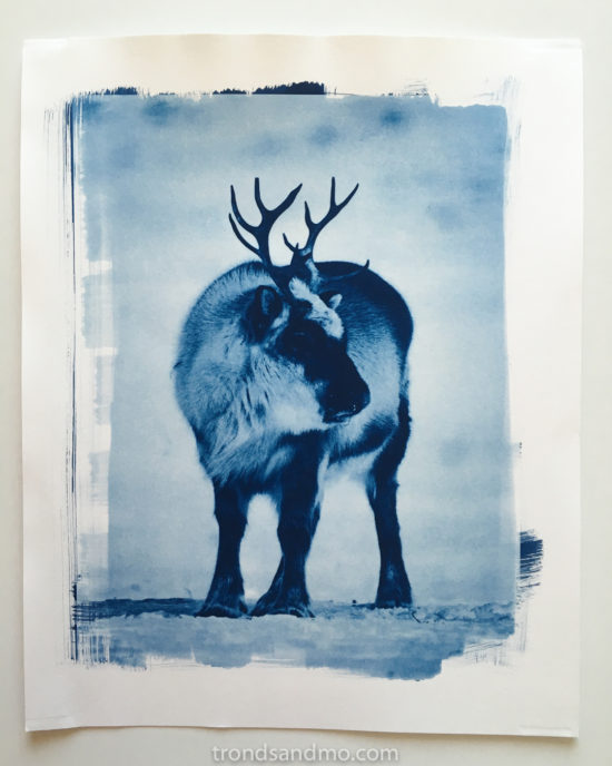 reindeer printed with cyanotype